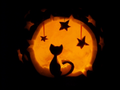 pumpkincat750